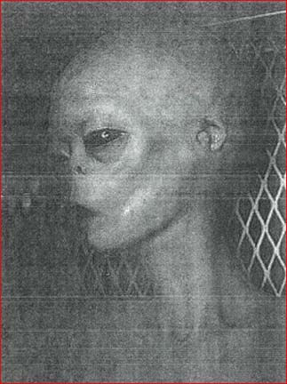 Autopsy Notes On Extraterrestrial Biological Entities (EBE): Real Dead Aliens?